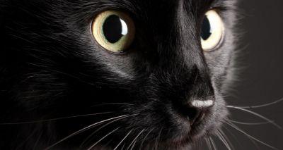 RSPCA highlights plight of black cats