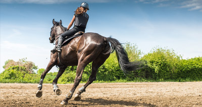 Warning over risk to horses from plastic granulate