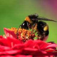 Neonicotinoid replacement may also harm bees - study