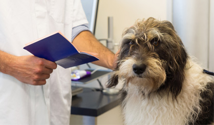BVA calls for changes to Pet Travel Scheme