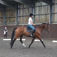 New method helps vets assess ridden pain in horses