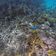New study fuels concerns about coral bleaching