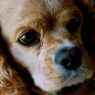 Blood test to help vets spot liver disease in dogs