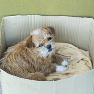Plans to regulate Scottish rescue centres welcomed
