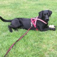 Puppy undergoes world-first combination surgery