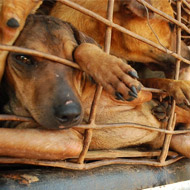 Hanoi to ban trade in dog meat from 2021