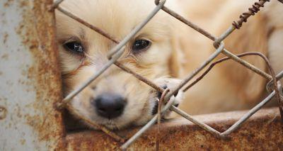 Scotland to establish Animal Welfare Commission