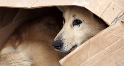 BVA issues warning not to rescue dogs from abroad