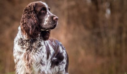 Research sheds new light on Alabama rot