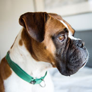 New study sheds light on seizures in dogs