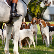 Vets and nurses concerned over bTB spread in hunting hounds