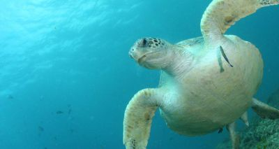 Single piece of plastic 'can be fatal for sea turtles'