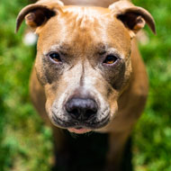 MPs call for review of dog control laws