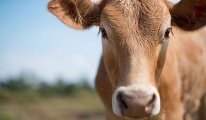 Case of BSE detected in Aberdeenshire