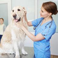 Female vets 'still facing discrimination' - survey