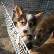 Welsh consultation to seek views on third party puppy sale ban