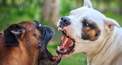 Vets urged to report suspected dog fighting injuries