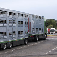 Hauliers warned over African swine fever risk