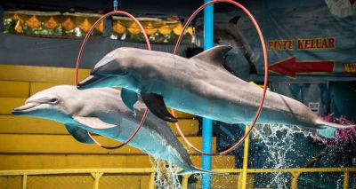 'Shocking' images captured from travelling dolphin shows