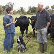 BVA welcomes Defra announcement on bovine TB