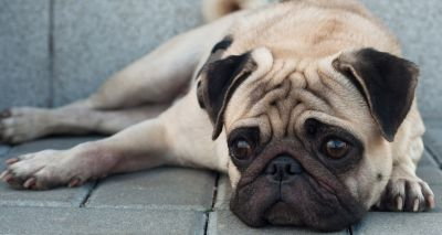 BVA launches new pet advertising guidelines