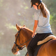 Latest research on pain-associated behaviour in ridden horses presented