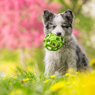 Dog owners sought for study into toy attachment