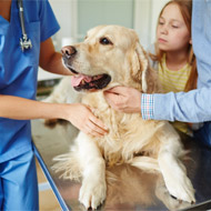 New study may improve cancer treatment for dogs