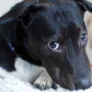 Millions of pets facing an unhappy life - report
