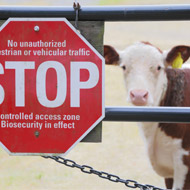 Latest animal health surveillance report welcomed