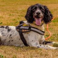 Conservation detection dog saving Britain's hedgehogs