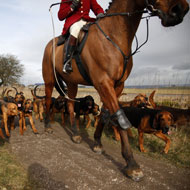 Scotland to introduce new legislation on fox hunting