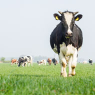New study offers 'win win' for farming and wildlife