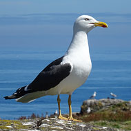 Views sought on new protections for seabirds