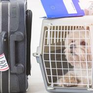 Spike in pet owners seeking travel guidance