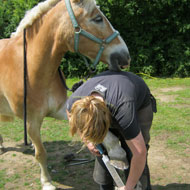 Weight gain in horses more than doubles laminitis risk - study