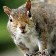 Wildlife groups criticise new laws on non-native species