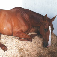 New scheme to help horse owners identify colic