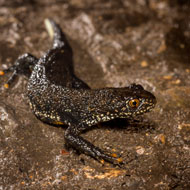 Charity urges amphibian traders to step up biosecurity