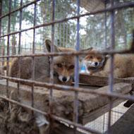 FOUR PAWS to rescue Gaza zoo animals