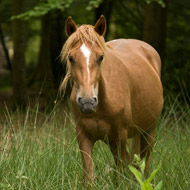 <em>Hyalomma</em> tick confirmed in untravelled UK horse