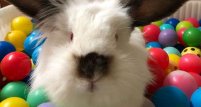 Rescue centre creates bunny ball pit to promote rabbit enrichment