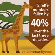 Giraffes to be given greater protection against unregulated trade