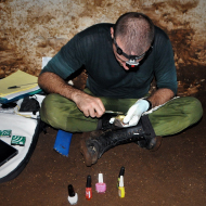 'Bat manicures' help to save rare species