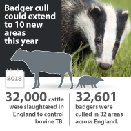 Badger cull could extend to 10 new zones