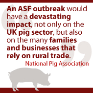 Minister admits ASF outbreak in UK likely within a year