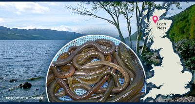 Loch Ness Monster may be an eel, study suggests
