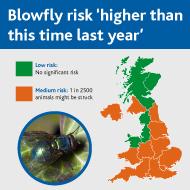 Blowfly strike risk medium