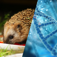 Genomes of British wildlife to be mapped