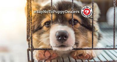 Assured puppy breeder scheme launched in Scotland